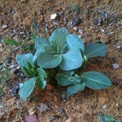Cordova · Gardening in Fuensanta