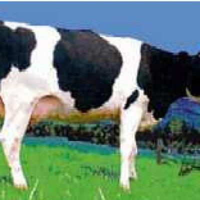 campina milch genverseucht